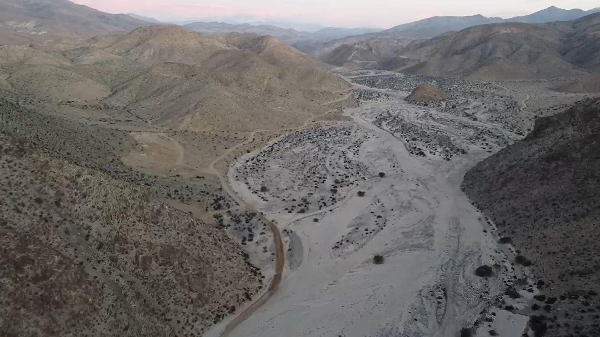 Construyen catálogo digital de la fauna de Atacama existente en tres sitios