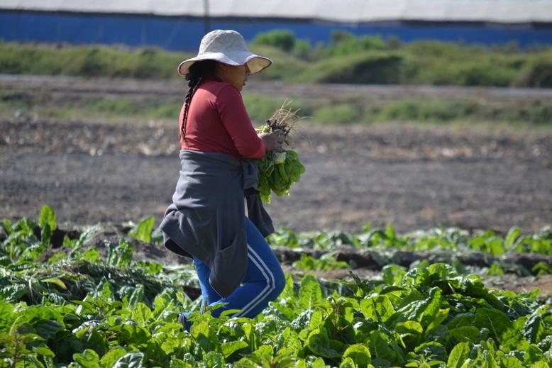 Mujeres agricultoras y de pueblos originarios podrán postular al primer concurso nacional de riego y eficiencia hídrica de la Ley de Riego