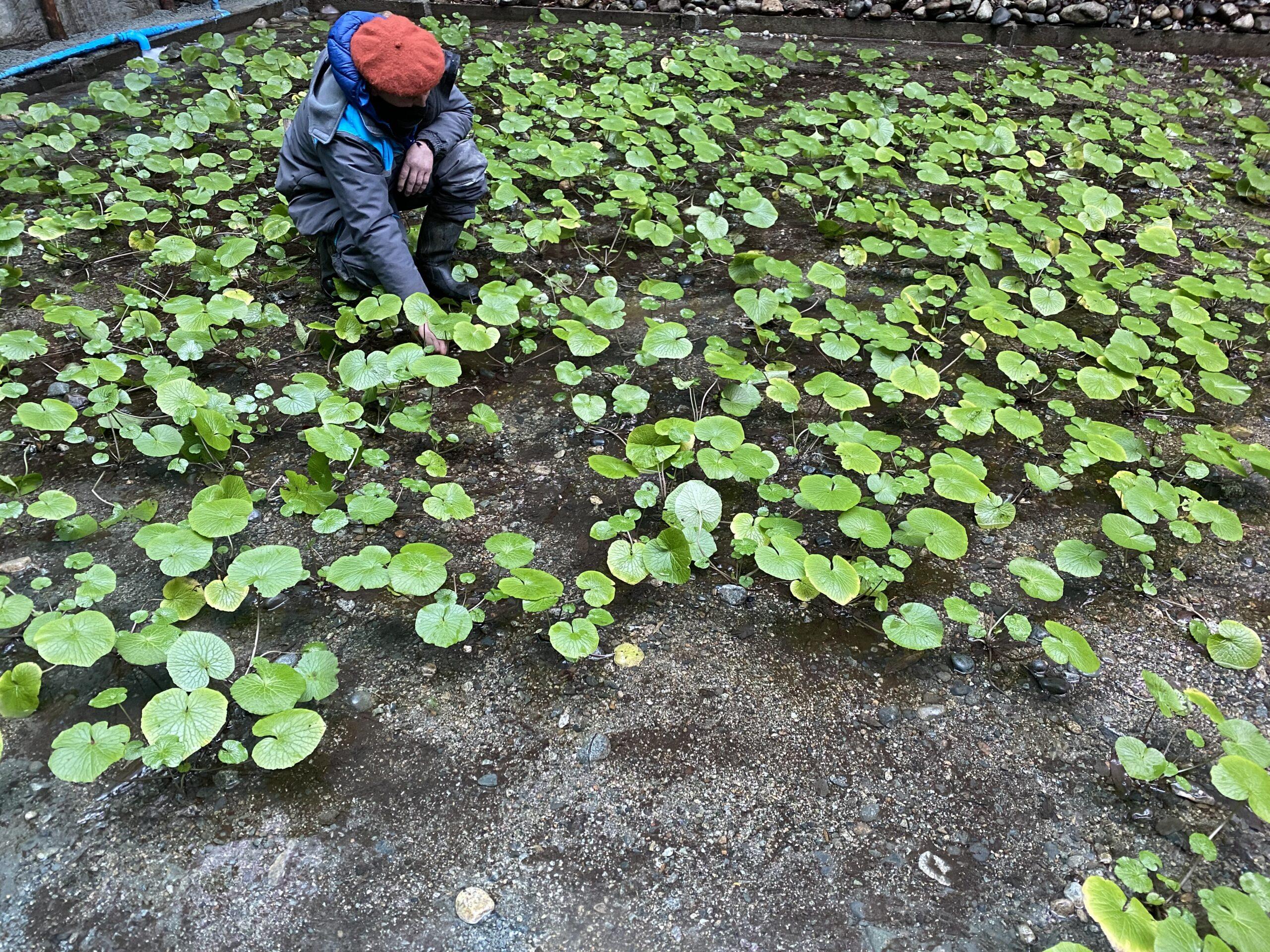 Seremi de Agricultura Patricio Araya Vargas invita a participar en Convocatoria para Proyectos de Innovación en el Agro