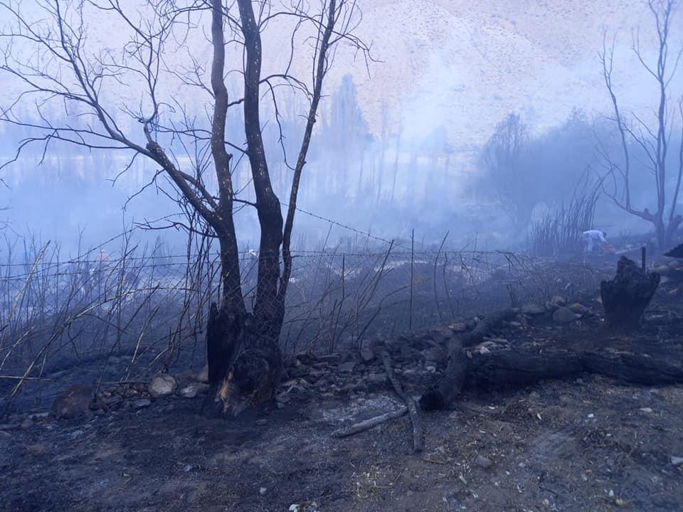 Logran controlar reactivación de focos en incendio de Albaricoque