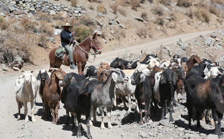 CONAF detecta actividad minera al interior de Parque Nacional Llanos de Challe