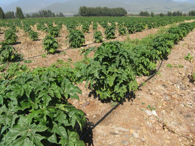 CNR y GORE Atacama continuarán apoyando a agricultores y comunidades indígenas a fortalecer sistemas de riego