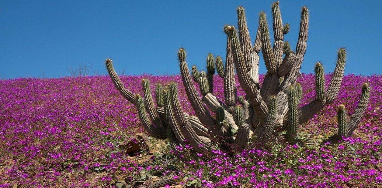 Delegado Patricio Urquieta anuncia proyecto piloto de riego para tener desierto florido todos los años en Atacama