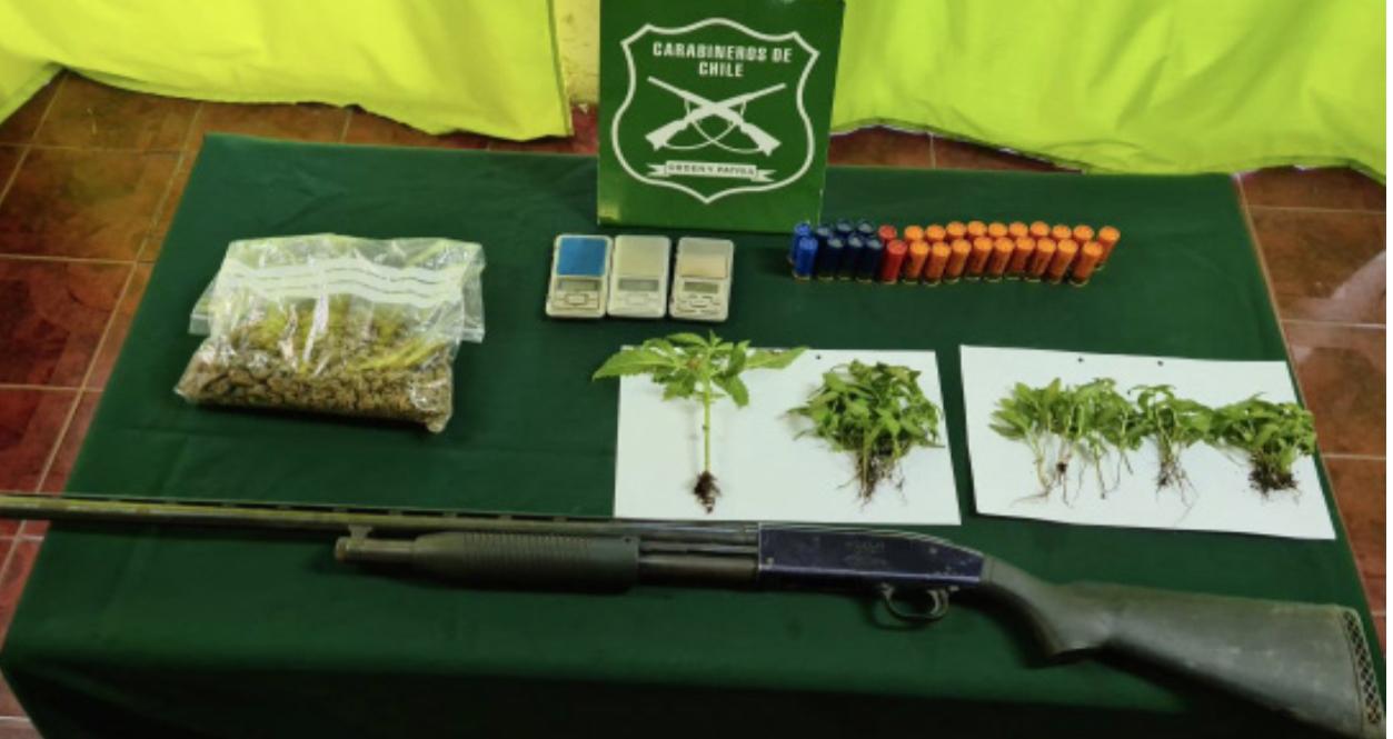 Carabineros incautó 80 plantas de marihuana durante procedimiento por violencia intrafamiliar en la comuna de Freirina
