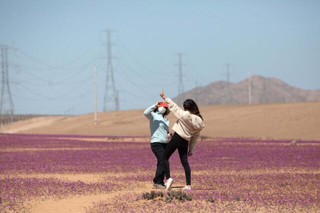 Comisión Regional del Desierto Florido inicia Campaña de Promoción y Protección del fenómeno natural ad portas del peak de floración en octubre